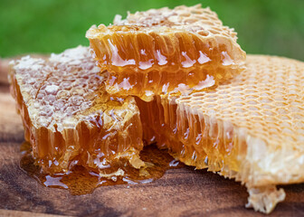 Obraz honey and honeycombs. just from the bee hive. close-up photography. - fototapety do salonu