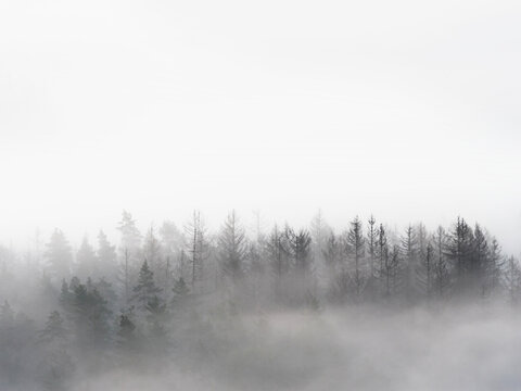 Foggy forest in a gloomy landscape. Trees in heavy fog