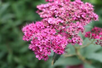 Fototapeta park kwiat krzew lato czas wolny obraz