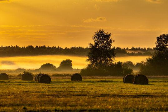 Foggy panorama of meadows at sunrise, the buffer zone of the Bialowieski National Park