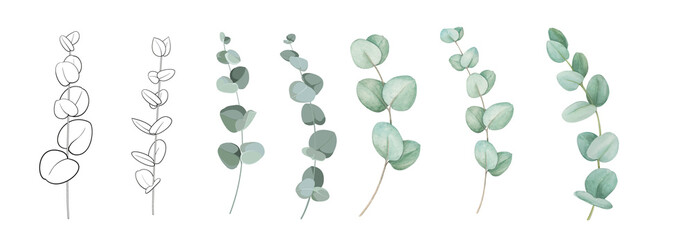 Fototapeta Set of differents eucalyptus branches on white background. Watercolor, line art, outline illustration. obraz