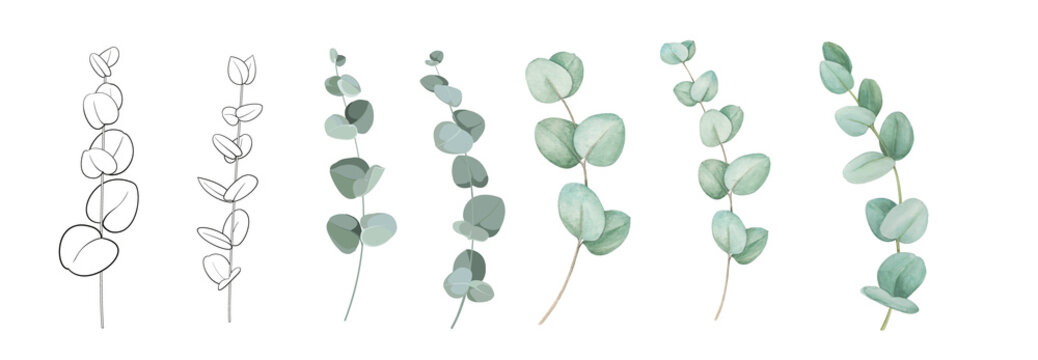 Set of differents eucalyptus branches on white background. Watercolor, line art, outline illustration.