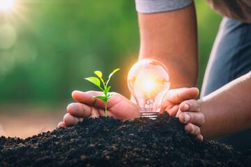 Fototapeta energy concept. eco power. hand protection lightbulb with small tree growing on soil obraz