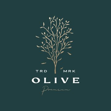 olive tree sophisticated aesthetic logo vector icon illustration