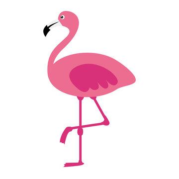 Pink flamingo on white background. Vector illustration.