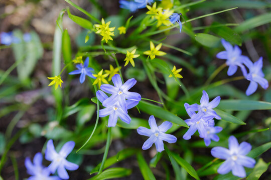 Spring flowers and grass outdoors