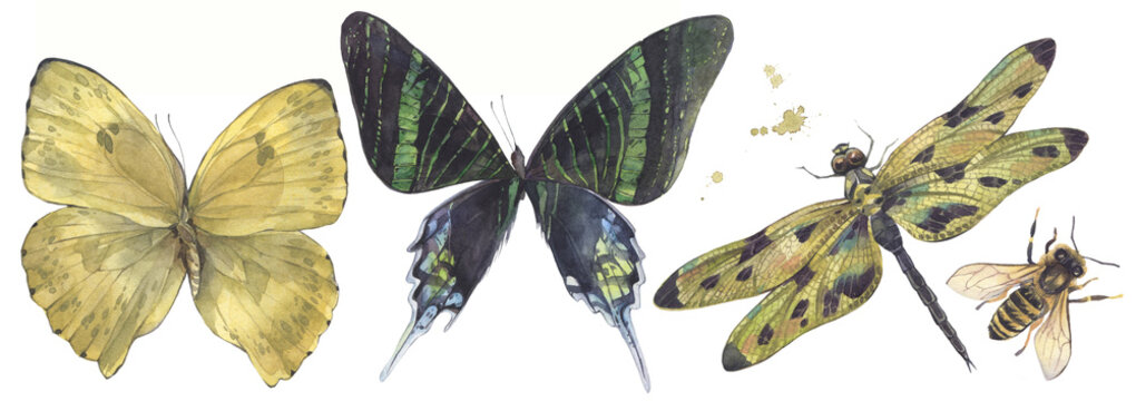 A set of insects. Dragonfly, butterflies and bee. Hand painted watercolor illustration.