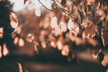 Beautiful Soft focused autumn scene with orange leaves and blurred brown branches. Falling leaves natural outdoor landscape background design for social media, seasonal quotes. Vintage fall wallpaper.