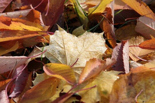 Feuchtes Herbstlaub