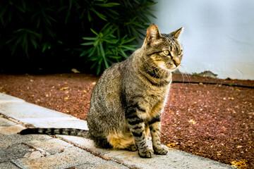 Obraz Siedzący kot z hotelu na Lanzarote  - fototapety do salonu