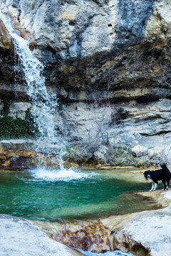 Turquoise transparent water hidden falls with the wet dog on the foreground at french Pontaix village. France 2021