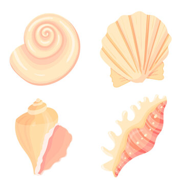 Set of conch flat cartoon vector Illustration. Colorful tropical beach shell underwater icon. Aquatic nature. Sticker collection.