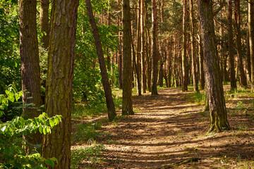 Obraz summer forest road - fototapety do salonu