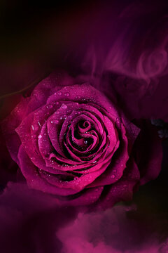 Hot pink rose with a heart-shaped center