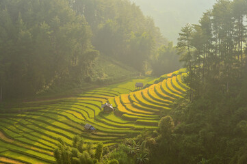 Green Rice fields on terraced in Mu cang chai, Vietnam Rice field