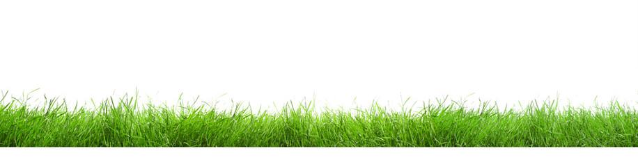 Fototapeta Beautiful lush green grass on white background. Banner design obraz