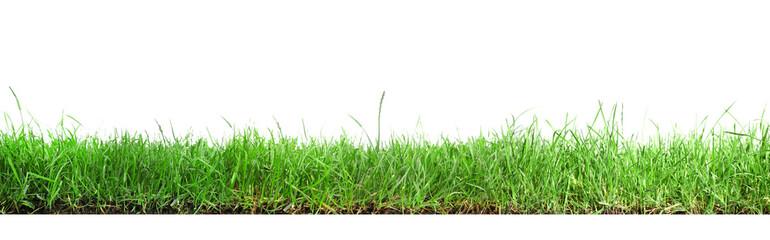 Obraz Beautiful lush green grass on white background. Banner design - fototapety do salonu