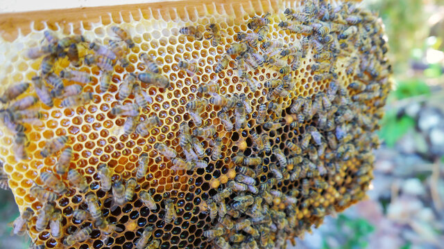 hive with breeding bees for the production