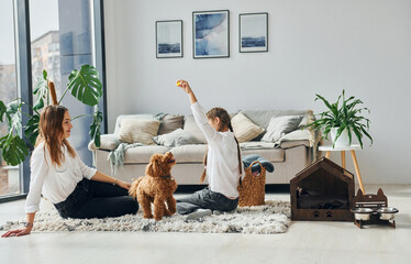 Obraz Mother with her daughter playing with dog. Cute little poodle puppy is indoors in the modern domestic room - fototapety do salonu
