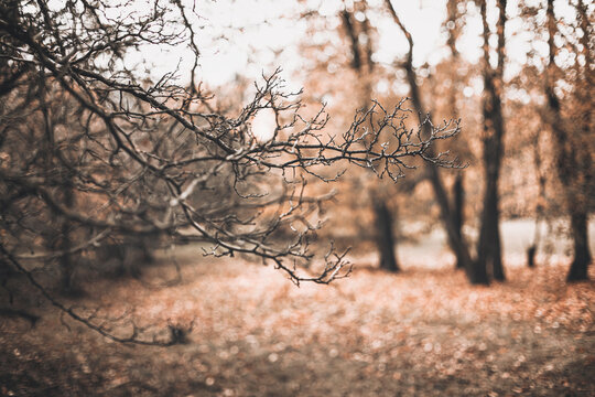 Beautiful autumn scene with brown branches on blurred falling leaves background. Fall natural outdoor landscape background design for social media, seasonal quotes. Vintage sepia design, copy space
