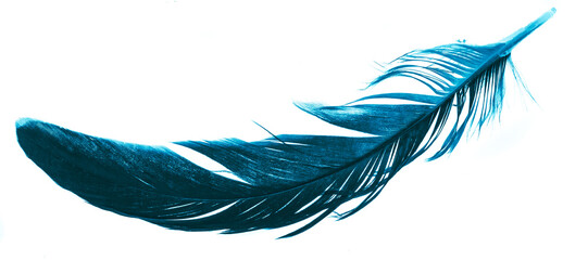 a blue feather on a white isolated background