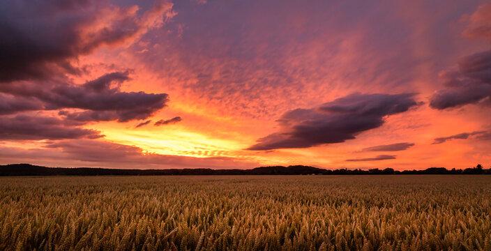 Glowing wheat field at spectacular sunset in Ronnenberg / Leuchtendes Weizenfeld im Sonnenuntergang in Ronnenberg