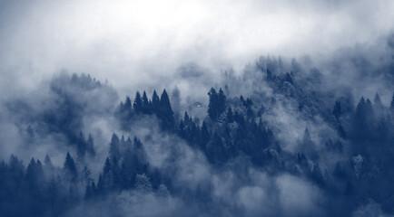 Fototapeta 森の背景 obraz