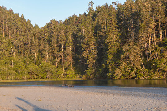 Calm water next to redwood trees in northern California