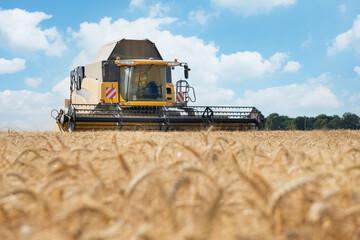 Fototapeta Les moissons de blé en juillet en France obraz