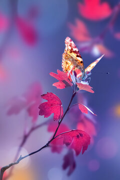 Bright  autumn summer natural background. Red leaves and yellow butterfly in forest. Magical nature of autumn.