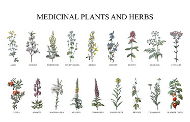 Obraz Medicinal plants and herbs collection - vintage illustration from Larousse du xxe siècle - fototapety do salonu