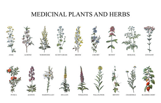 Medicinal plants and herbs collection - vintage illustration from Larousse du xxe siècle