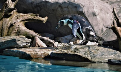Pingwin, zoo, zwierzęta