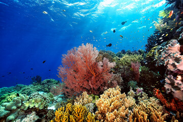 A picture of the coral reef