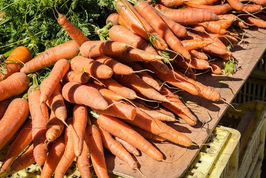 Carrot bunch on the farmers market in Drome region. France 2021