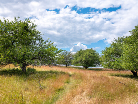 Grass meadow landscape with surrounding trees in summer. Sunny day with blue sky and white clouds. Shot at Birka, Björkö, Sweden, Scandinavia