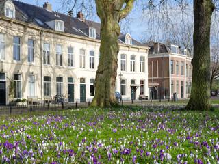 Haarlem, Noord-Holland Province, The Netherlands