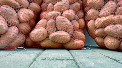 Fototapeta Płody rolne. Worki pełne ziemniaków. obraz