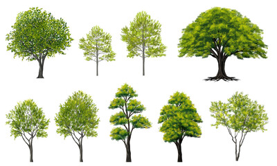 watercolor tree side view isolated on white background  for landscape and architecture layout drawing, elements for environment and garden