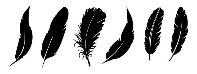 feather vector collection