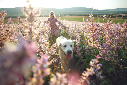 Group of children with a dog in nature. Girls play in the open air. High quality photo