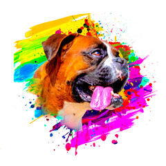 Obraz boxer dog head with creative colorful abstract elements on background - fototapety do salonu