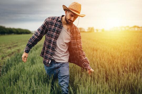 man walking through wheat filed