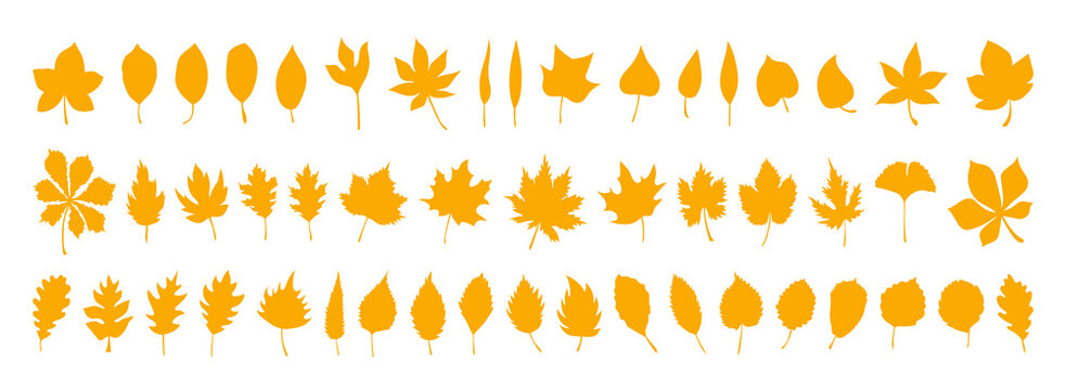 Big set of vector autumn leaves, herbal elements. Collection of fall simple orange leaves. 50 silhouettes of autumn botanical flat isolated leaves for design. Can be used as sign, symbol, icon or logo
