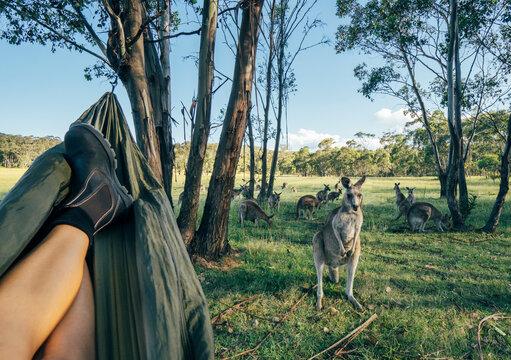 Woman relaxing in hammock watching kangaroo, Australia