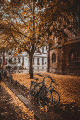 bicycle path in the autumn