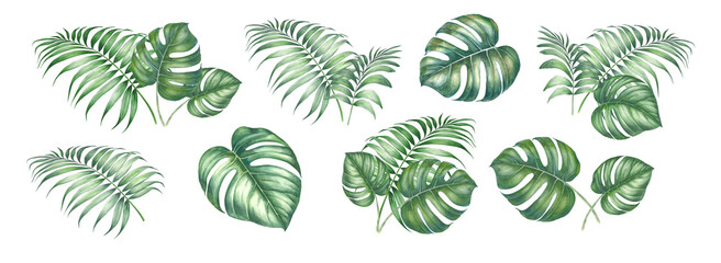 Fototapeta Watercolor elements of monstera. Tropical set garden flowers. Collection botanic illustration leaves, flower and branches. obraz