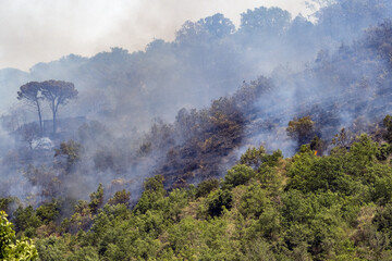 Obraz Forest and bush fire in Sicily - fototapety do salonu