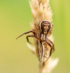 pająk zjada ofiarę