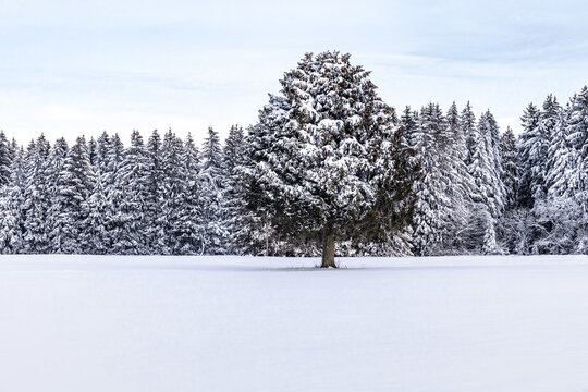 One Tree in Winter